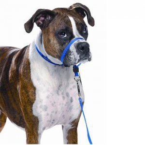 how to get dogs used to halter collar