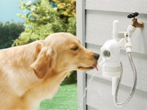 WaterDog Pet Drinking Fountain from Grommet